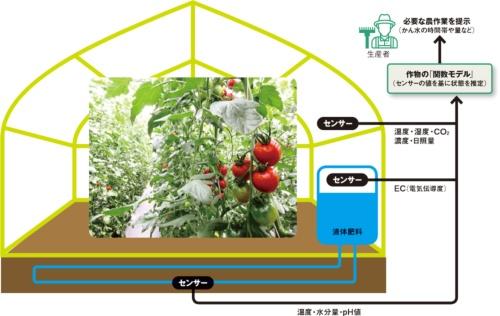 図 プラントライフシステムズが開発した、トマト農家向けIoTシステムの概要