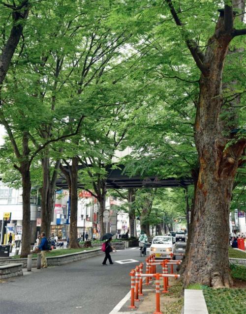 京王線府中駅付近のけやき並木通り。東京都府中市が維持管理を包括的民間委託する市道の1つ(写真:日経クロステック)