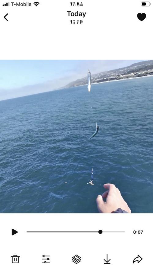 イワシを釣った際の動画をスマホで再生し、画面をキャプチャーしたもの