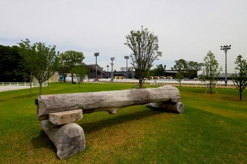 馬事公苑のナチュラルアリーナ。馬術競技のクロスカントリーに対応している(写真:安川 千秋)