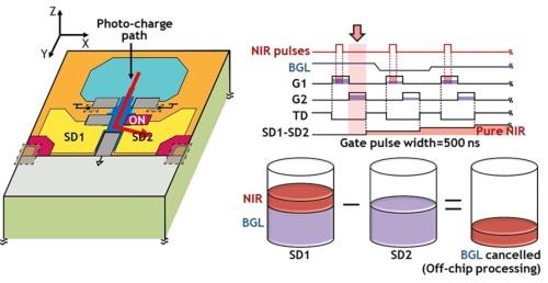 図2●開発したセンサーの構造と動作。静岡大学とブルックマンテクノロジ、千葉大学の図