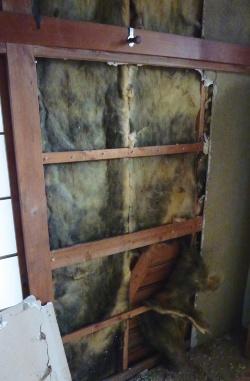 2棟とも今回調査した住宅。築44年になる東京都内の住宅で、内装材を剥がした状態。黒い変色が断熱材全体に見られる(写真:ヒノキヤグループ)