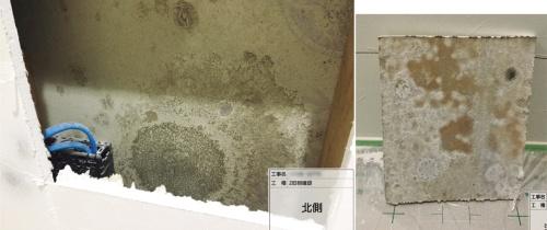 〔写真2〕壁内にも大量のカビ