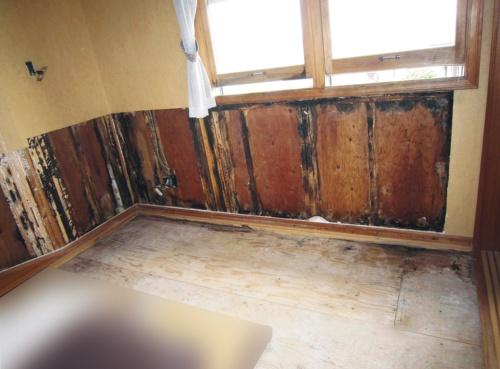 〔写真1〕合板の室内側に腐朽菌が発生