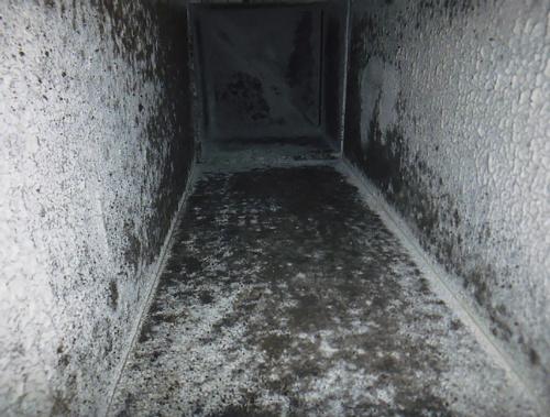 〔写真1〕SAダクト内のほこり