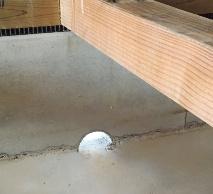 排水口を設けたベタ基礎。通常はモルタルで塞いであり、床上浸水などで床下に水がたまった時は開けて排水口にする(資料:リスプ環境・都市建築研究所)