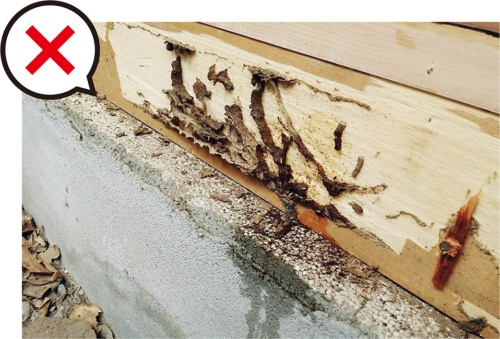 〔写真1〕基礎外断熱の蟻害