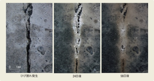 〔図1〕約2カ月でひび割れを修復
