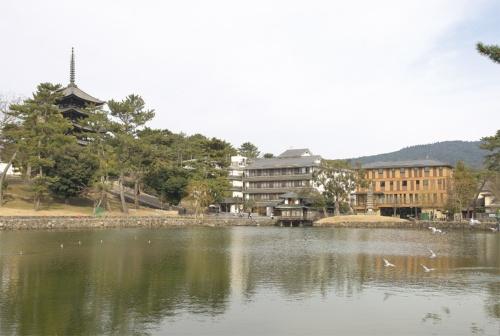 猿沢池越しに「セトレならまち」(写真右端)を見る。左隣は発注者が営む旅館、左端は興福寺五重塔。外壁の縦方向に用いた木材は吉野スギで、森林の木立をイメージして階差数列に基づき配置した(写真:生田 将人)