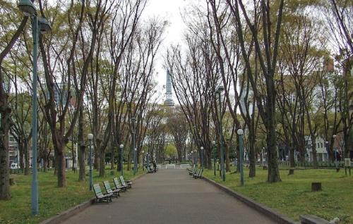 〔写真2〕木が生い茂る薄暗い印象を払拭