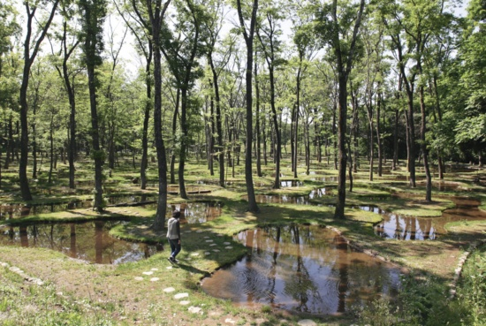 「水庭」の敷地は、古い順に森林、水田、牧草地という地歴を持つ。ガラスや陶芸のアトリエを併設する滞在型体験施設の1つ。宿泊者は滞在中自由に利用でき、日帰りの見学ツアーもある(写真:安川 千秋)