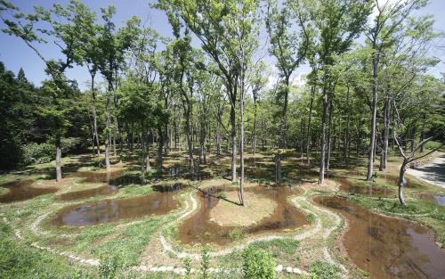 〔写真2〕大小様々な形状の池と木の関係をデザイン