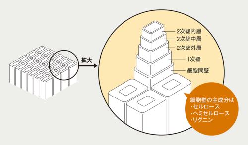 〔図1〕リグニンは木材の細胞壁の主成分