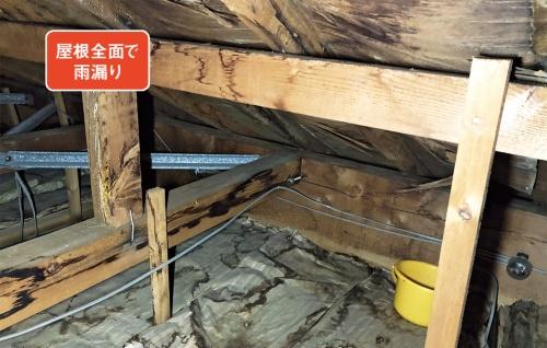 雨漏りの原因を探るため小屋裏へ入ると、屋根全面に雨染みが発生。野地板は層状剥離を起こしてたわんでいた(写真:神清)