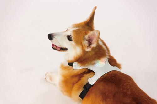 ペットの感情を把握する「INUPATHY」の装着例(写真提供:ラングレス)