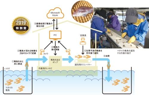 図●マダイの稚魚を選別するAIシステムの概要