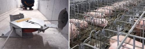 豚舎床下の集ふん装置のスイッチ。大きな「へら」をワイヤーで引いてふんをかき集める