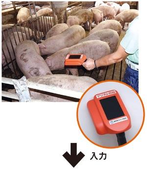 デジタル目勘(右)で豚の画像を撮影