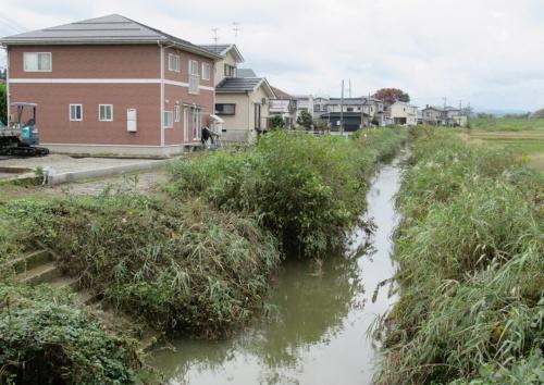 写真1■ 平常時の浄土川。左側が今井地区(写真:日経 xTECH)