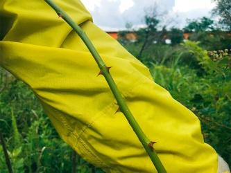 写真2■ トゲのある樹木の中をかき分けて歩くと、作業着などが汚れたり破れたりする(写真・資料:松嶋建設)