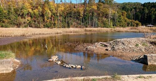写真1■ 宮城県気仙沼市の舞根地区に再生された湿地。海とつながる河川と湿地を連結して水循環を促進している(写真:中静 透)