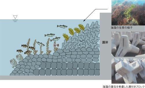 図2■ 秋田港の生物共生型護岸は被覆型のブロックタイプ