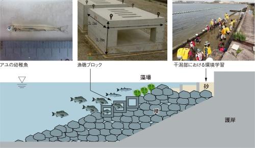 図3■ 堺泉北港の生物共生型護岸は被覆型の砂泥(干潟)とブロックの両タイプを使う