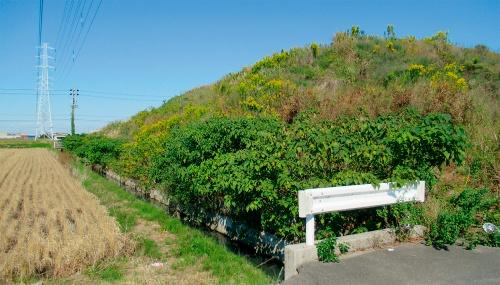 写真1■ 愛知県弥富市の金魚養殖場跡地に投棄された残土。道路よりも30cm低い位置まで埋める計画だったにもかかわらず、残土の山が築かれた(写真:日経コンストラクション)