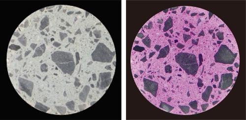 写真2■ 直径10cmのコンクリート供試体の切断面。右はpH指示薬の噴霧後。変色部は強アルカリ性を示す(写真・資料:大成建設)