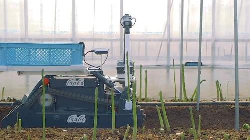 図1 自動野菜収穫ロボット