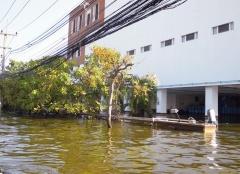 図2 2011年タイ洪水の様子