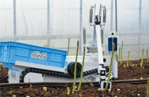 図1 自動野菜収穫ロボットによるアスパラガスの収穫