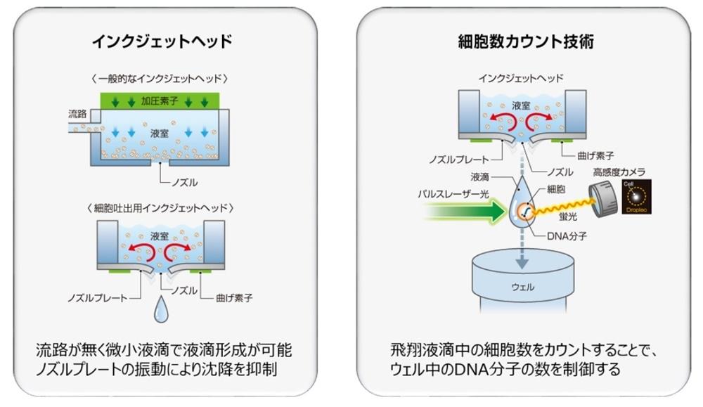 リコーが有するバイオプリンティング技術を組み合わせる(出所:リコー)