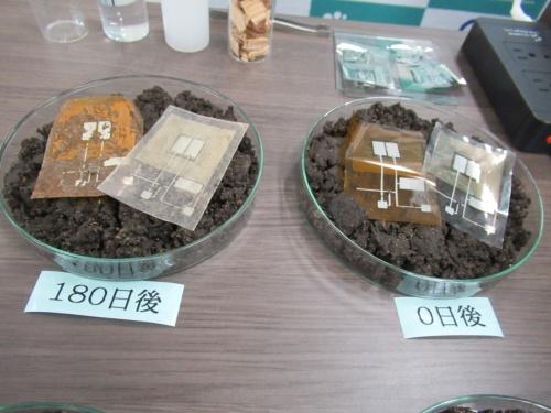 0日後と180日後のそれぞれのシャーレにある左側(茶色)がポリイミド製、右側(透明)がポリエチレンテレフタレート製のデバイス
