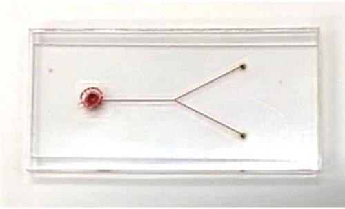 図4:マイクロ流路の溶着例(赤色インクを注入して撮影)
