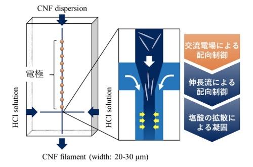 図:交流電場と流れ場を組み合わせたCNF配向法によるセルロース単繊維創製法